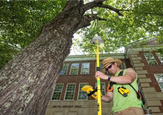 Arborist Consultations-Coral Gables FL Tree Trimming and Stump Grinding Services-We Offer Tree Trimming Services, Tree Removal, Tree Pruning, Tree Cutting, Residential and Commercial Tree Trimming Services, Storm Damage, Emergency Tree Removal, Land Clearing, Tree Companies, Tree Care Service, Stump Grinding, and we're the Best Tree Trimming Company Near You Guaranteed!