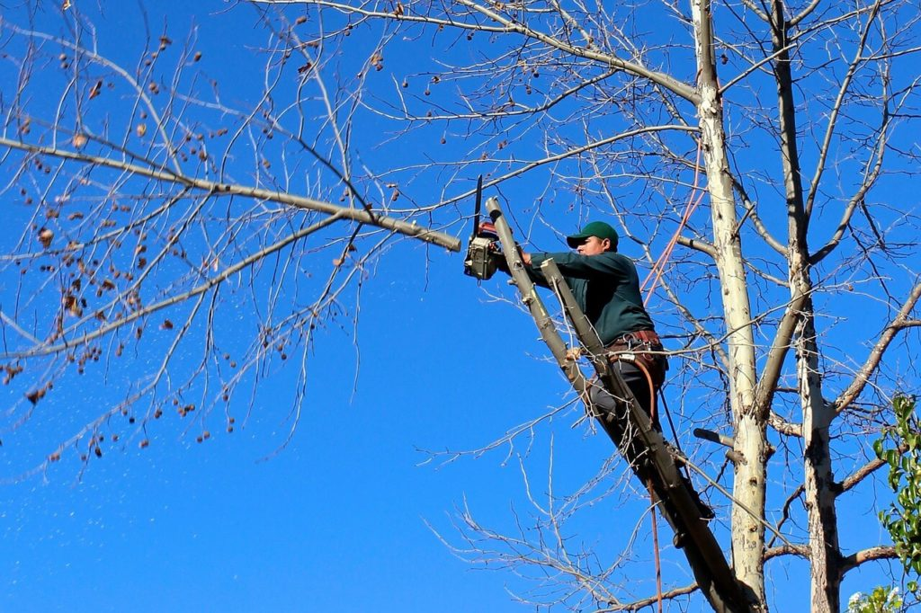 Contact Us-Coral Gables FL Tree Trimming and Stump Grinding Services-We Offer Tree Trimming Services, Tree Removal, Tree Pruning, Tree Cutting, Residential and Commercial Tree Trimming Services, Storm Damage, Emergency Tree Removal, Land Clearing, Tree Companies, Tree Care Service, Stump Grinding, and we're the Best Tree Trimming Company Near You Guaranteed!