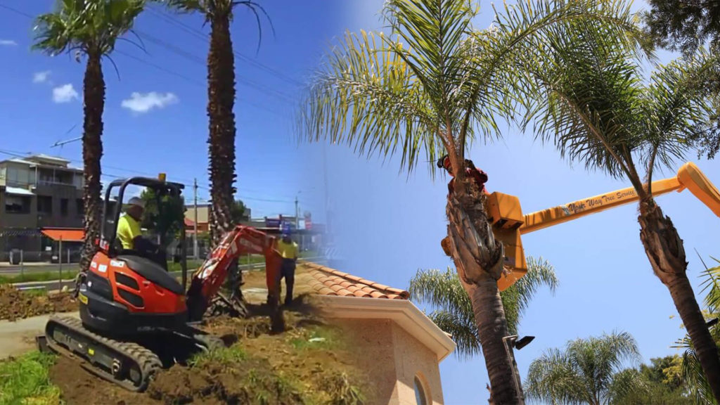 Palm tree trimming & palm tree removal-Coral Gables FL Tree Trimming and Stump Grinding Services-We Offer Tree Trimming Services, Tree Removal, Tree Pruning, Tree Cutting, Residential and Commercial Tree Trimming Services, Storm Damage, Emergency Tree Removal, Land Clearing, Tree Companies, Tree Care Service, Stump Grinding, and we're the Best Tree Trimming Company Near You Guaranteed!