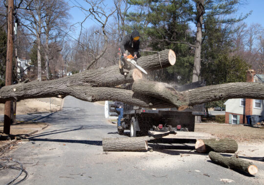 Residential Tree Services-Coral Gables FL Tree Trimming and Stump Grinding Services-We Offer Tree Trimming Services, Tree Removal, Tree Pruning, Tree Cutting, Residential and Commercial Tree Trimming Services, Storm Damage, Emergency Tree Removal, Land Clearing, Tree Companies, Tree Care Service, Stump Grinding, and we're the Best Tree Trimming Company Near You Guaranteed!