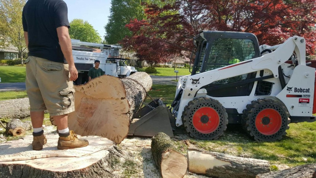 Services-Coral Gables FL Tree Trimming and Stump Grinding Services-We Offer Tree Trimming Services, Tree Removal, Tree Pruning, Tree Cutting, Residential and Commercial Tree Trimming Services, Storm Damage, Emergency Tree Removal, Land Clearing, Tree Companies, Tree Care Service, Stump Grinding, and we're the Best Tree Trimming Company Near You Guaranteed!