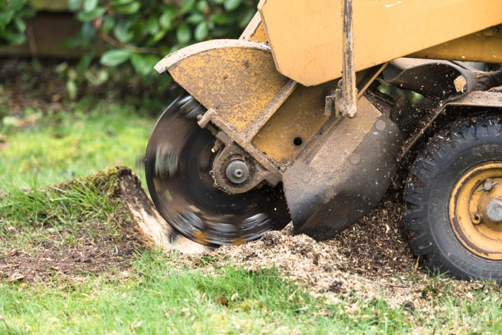 Stump Grinding-Coral Gables FL Tree Trimming and Stump Grinding Services-We Offer Tree Trimming Services, Tree Removal, Tree Pruning, Tree Cutting, Residential and Commercial Tree Trimming Services, Storm Damage, Emergency Tree Removal, Land Clearing, Tree Companies, Tree Care Service, Stump Grinding, and we're the Best Tree Trimming Company Near You Guaranteed!