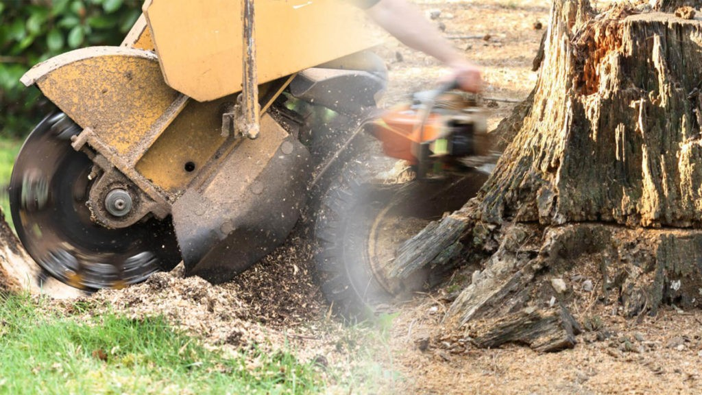 Stump grinding & removal-Coral Gables FL Tree Trimming and Stump Grinding Services-We Offer Tree Trimming Services, Tree Removal, Tree Pruning, Tree Cutting, Residential and Commercial Tree Trimming Services, Storm Damage, Emergency Tree Removal, Land Clearing, Tree Companies, Tree Care Service, Stump Grinding, and we're the Best Tree Trimming Company Near You Guaranteed!
