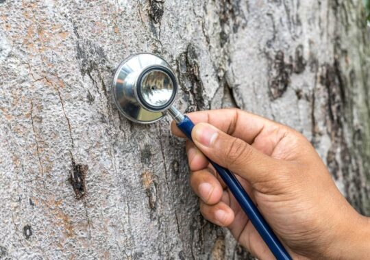 Tree Assessments-Coral Gables FL Tree Trimming and Stump Grinding Services-We Offer Tree Trimming Services, Tree Removal, Tree Pruning, Tree Cutting, Residential and Commercial Tree Trimming Services, Storm Damage, Emergency Tree Removal, Land Clearing, Tree Companies, Tree Care Service, Stump Grinding, and we're the Best Tree Trimming Company Near You Guaranteed!