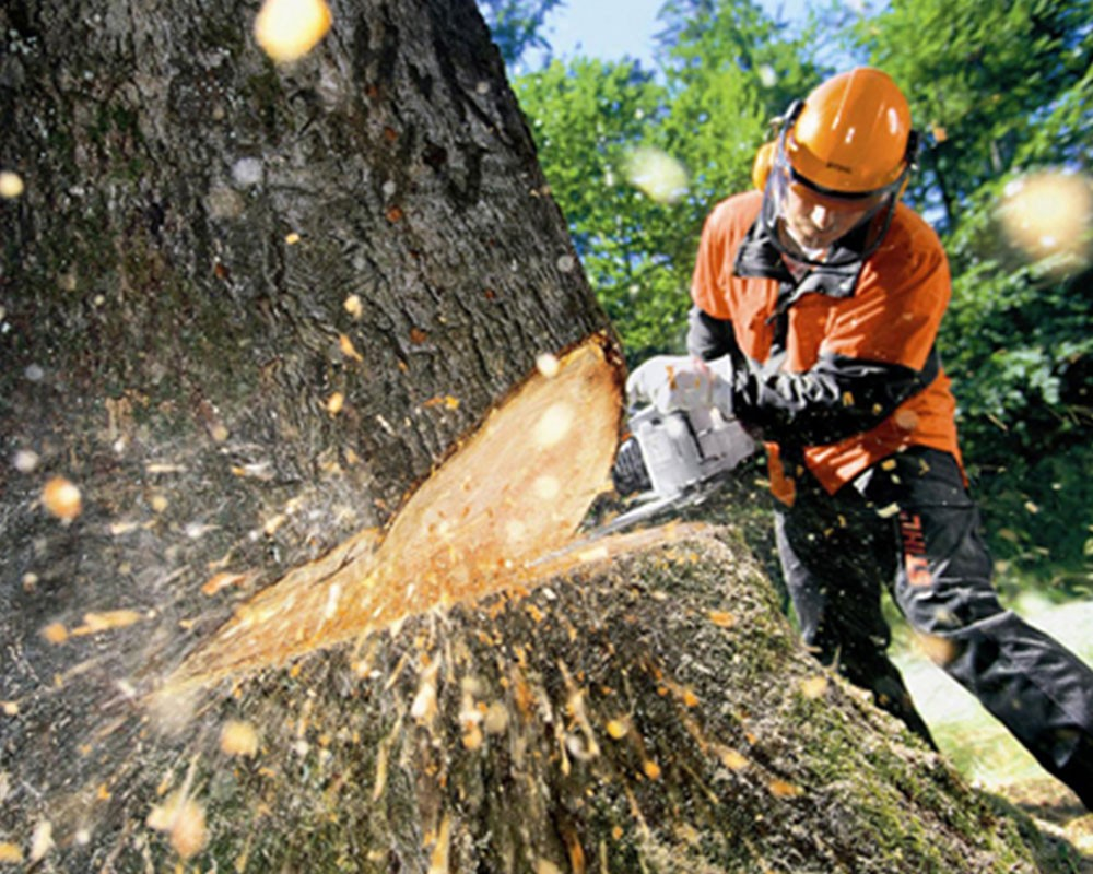 Tree Cutting-Coral Gables FL Tree Trimming and Stump Grinding Services-We Offer Tree Trimming Services, Tree Removal, Tree Pruning, Tree Cutting, Residential and Commercial Tree Trimming Services, Storm Damage, Emergency Tree Removal, Land Clearing, Tree Companies, Tree Care Service, Stump Grinding, and we're the Best Tree Trimming Company Near You Guaranteed!