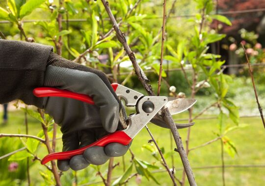 Tree Pruning-Coral Gables FL Tree Trimming and Stump Grinding Services-We Offer Tree Trimming Services, Tree Removal, Tree Pruning, Tree Cutting, Residential and Commercial Tree Trimming Services, Storm Damage, Emergency Tree Removal, Land Clearing, Tree Companies, Tree Care Service, Stump Grinding, and we're the Best Tree Trimming Company Near You Guaranteed!