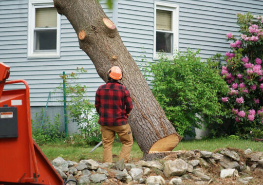 Tree Removal-Coral Gables FL Tree Trimming and Stump Grinding Services-We Offer Tree Trimming Services, Tree Removal, Tree Pruning, Tree Cutting, Residential and Commercial Tree Trimming Services, Storm Damage, Emergency Tree Removal, Land Clearing, Tree Companies, Tree Care Service, Stump Grinding, and we're the Best Tree Trimming Company Near You Guaranteed!