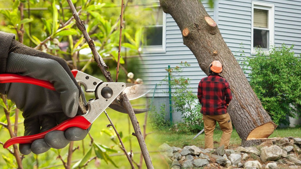 Tree pruning & tree removal-Coral Gables FL Tree Trimming and Stump Grinding Services-We Offer Tree Trimming Services, Tree Removal, Tree Pruning, Tree Cutting, Residential and Commercial Tree Trimming Services, Storm Damage, Emergency Tree Removal, Land Clearing, Tree Companies, Tree Care Service, Stump Grinding, and we're the Best Tree Trimming Company Near You Guaranteed!